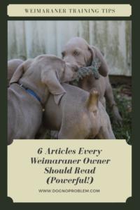 Weimaraner Training Tips