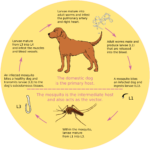 Worms in Dogs