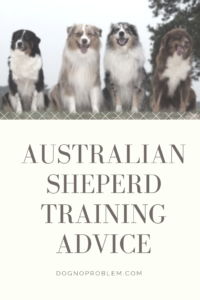 Australian Shepherd Training: 2 Insightful Articles (Must-Read!) 2