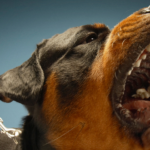 Stop Barking Dogs In 2 Ways: Speaking and Singing! 4