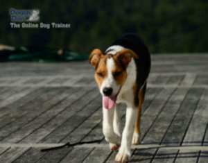Dog Obedience Training: Can You Do It Yourself? 2