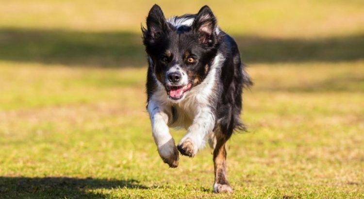 best dog recall training method