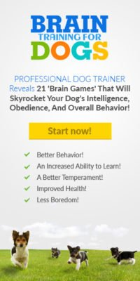 brain dog training