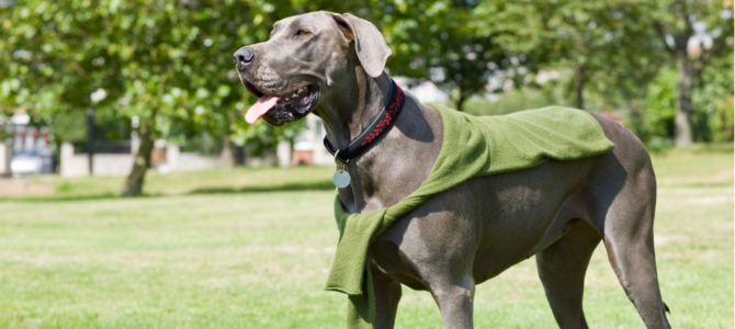 Great Dane Dog Training Tips & Tricks – 8 Articles (Immediately Actionable!)