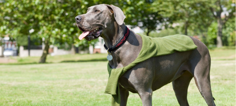 Great Dane Dog Training Tips & Tricks - 8 Articles (Immediately Actionable!) 1