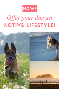 Your Dog Needs an Active Lifestyle