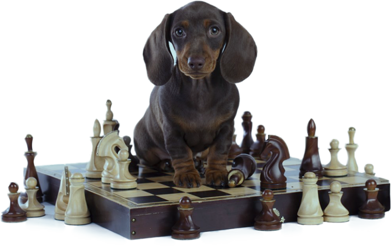 *LP - Brain Train Your Dog: Dog Intelligence Training 2