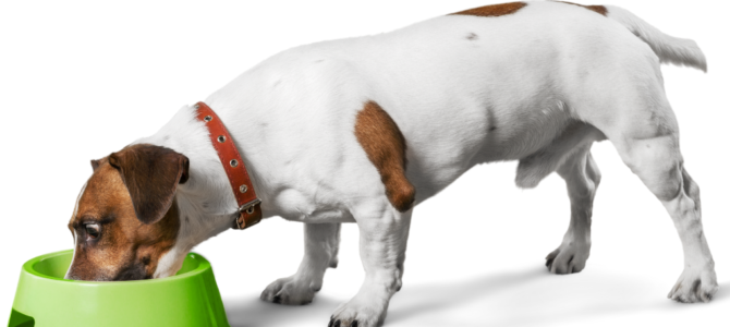 Dog Not Eating Issues: 3 Important Articles (Practical Tips!)