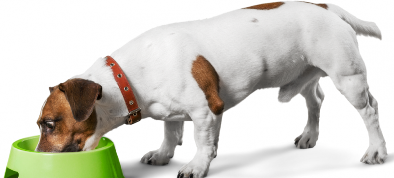 BARF Diet: Probably the Best Diet for Your Furry Friend... (5 Great Articles!) 1