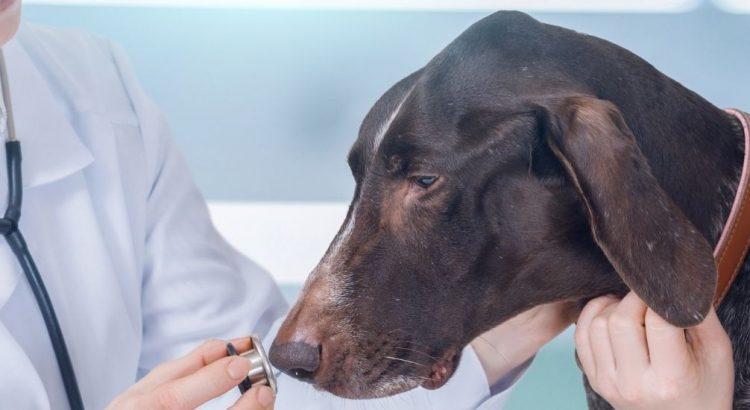 dog health check