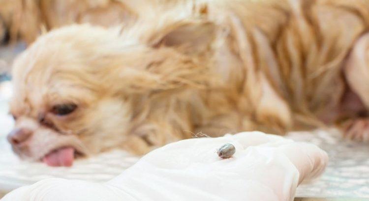 dog parasites