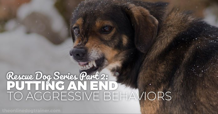 dog rescue training - ending Aggressive Behaviors