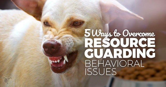 dog rescue training - resource guarding behavioral issues