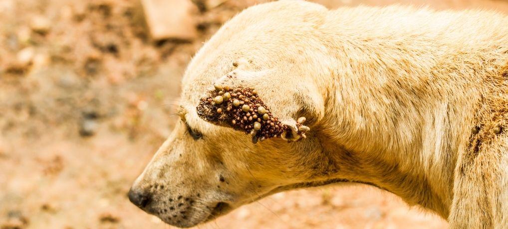 dog skin parasites