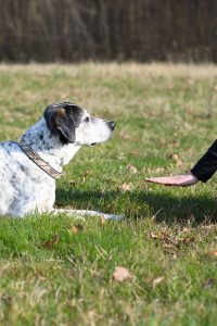 Dog Training Hand Signals 101 - Learn How to Easily Train Your Dog Training Using Hand Signals [New!] 1
