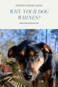 dogwhines