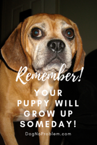 Your Growing Puppy Will Soon Become an Adult Dog...