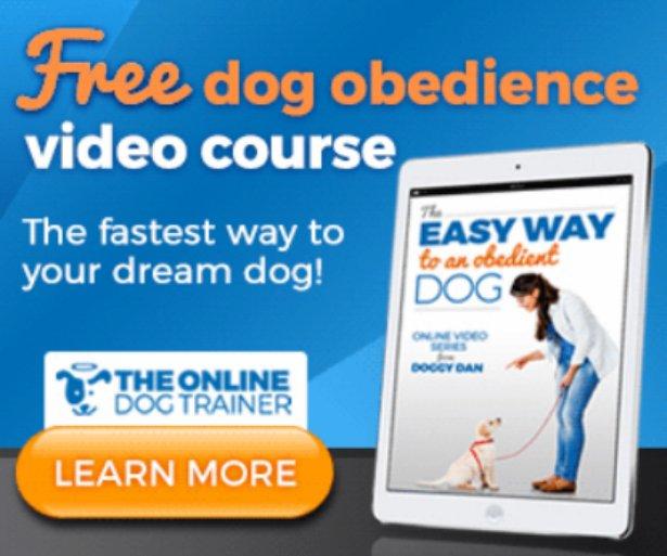 Plenty of Dog Training Tips - Videos!
