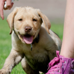 Puppy Training: Here's The Complete Guide (7 Easy Parts!) 6