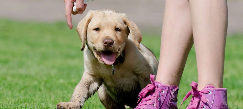 Puppy Training – the Complete Guide (7 Easy Parts!)