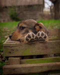 shelter dog adoption