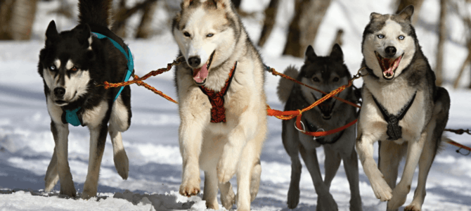 Smart Dog Training – 5 Quick Expert Tips