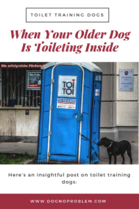 toilette training dog