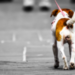 Walk a Dog: 11 Must-Know Rules to Avoid Getting into Problems 4
