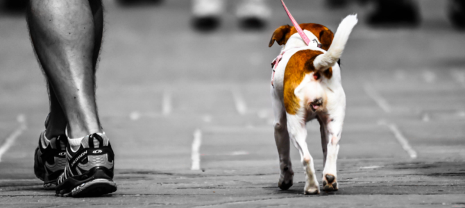 How to Walk a Dog – Must-Know Rules to Avoid Getting into Problems