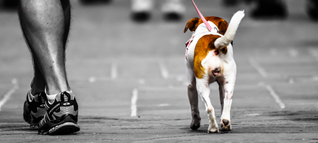 Walk a Dog: 11 Must-Know Rules to Avoid Getting into Problems 2